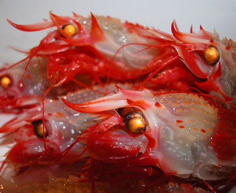 image:Goblin Shrimp (Glyphocrangon Sp.7)